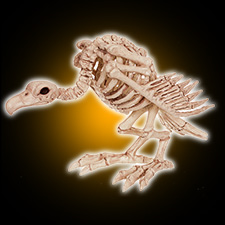 Skeleton Vulture