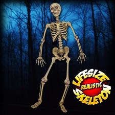 Life Size Realistic Skeleton