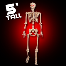 Light Up Pose-N-Stay Skeleton. 5 feet tall!