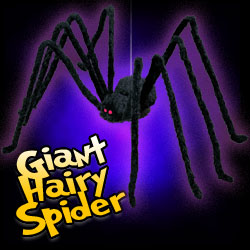 Giant Black Hairy Spider
