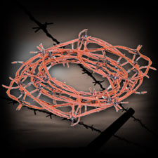 Rusted Barbed Wire - 20 Feet