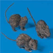 Realistic Hairy Rats - Halloween Decorations