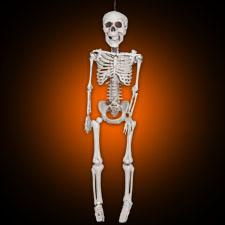 """36"""" Skeleton"""