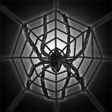 Spiderweb w/Spider