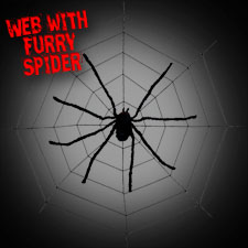 Spider Web With Furry Spider
