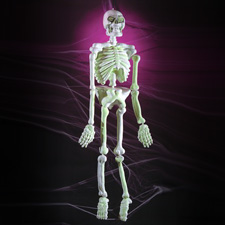 5' Glow-in-the-Dark Skeleton